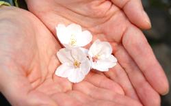 handsandflower